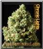Chronic Lights Feminized Mix & Match Seeds